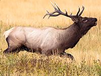 reindeer1.png